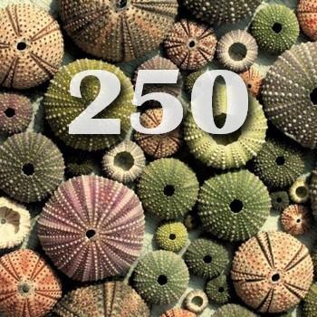 250 социальных сетей 2019